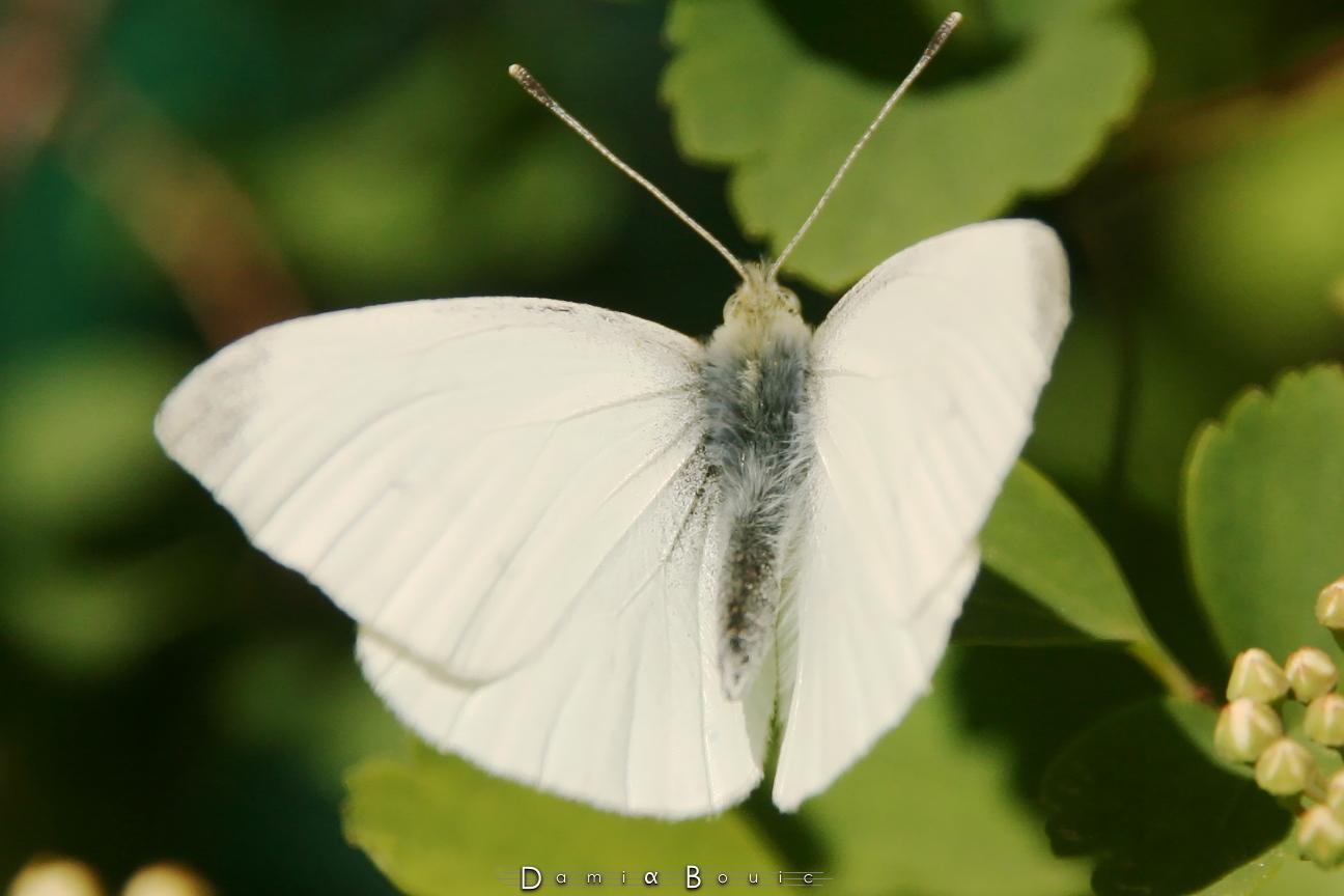 papillons libellule le long de l ouche chez damia bouic. Black Bedroom Furniture Sets. Home Design Ideas